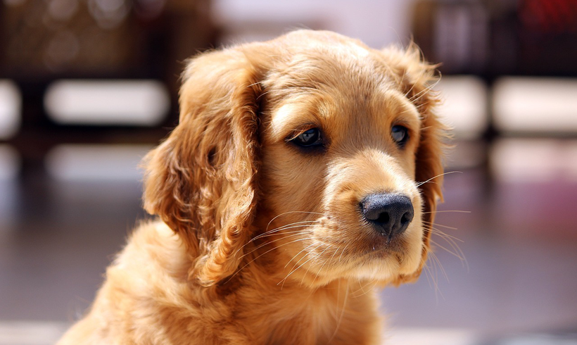 Puppy Vaccination and Socialization Should Go Together