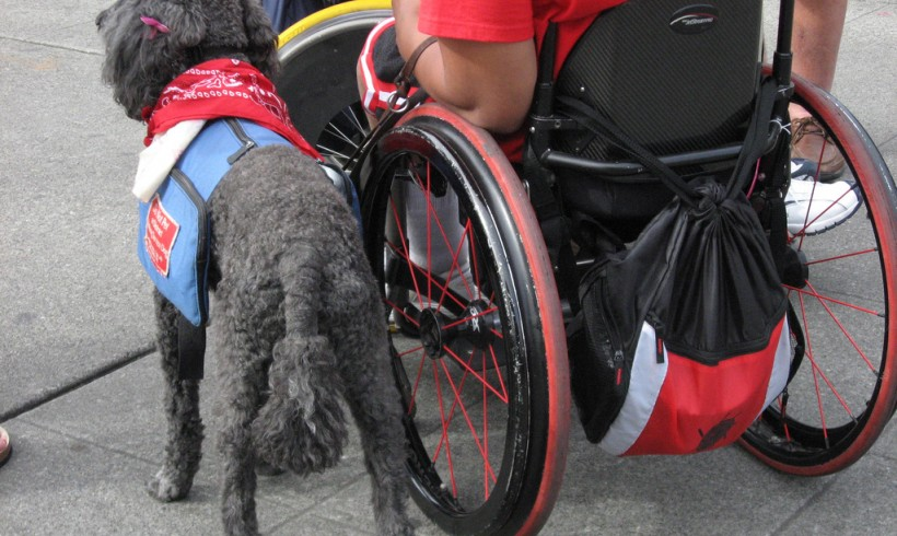 Therapy Dog or Service Dog next to Wheel chair