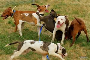 Dog Daycare: Helping You Find One!