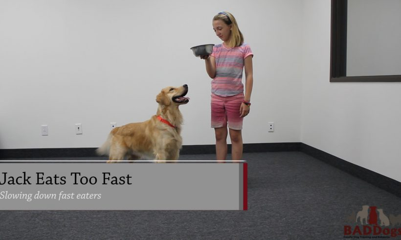 BADDogs Little Video: Jack Eats Too Fast! Does Your Dog Eat Fast?