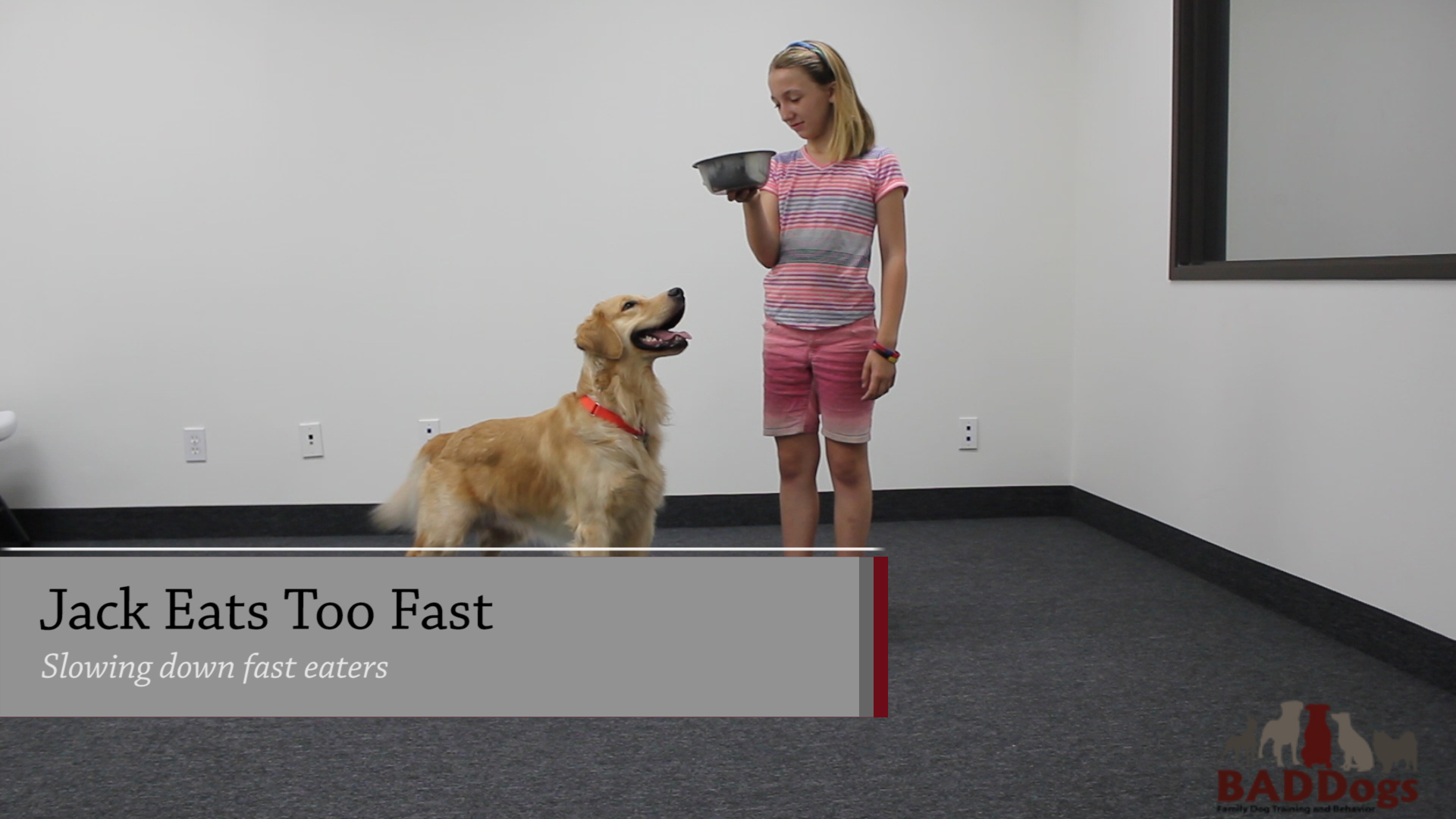 Does Your Dog Eat Fast
