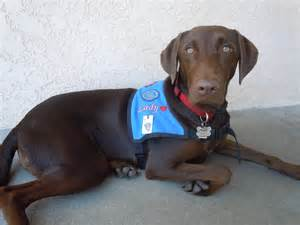 therapy dog training class